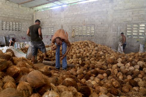 Coconuts for export to U.S. in Coco Siri's warehouse in Nagua.
