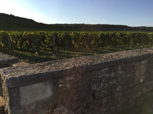 The Romanee Conti vineyard in Burgundy.