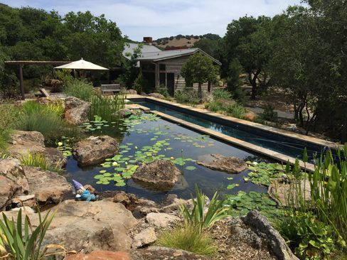 A multipart eco-swimming pond embedded in the landscape of Sonoma County. (Where else?)