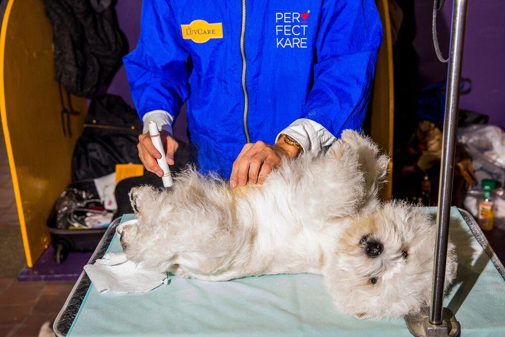 Kết quả hình ảnh cho U.S Law Allows Billionaires To Special Pet Care