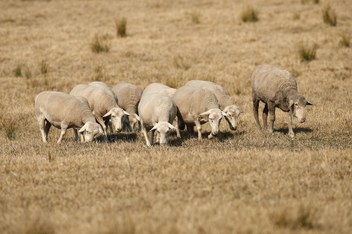 Drought-Stricken Australian Region to Spend $680 Million on Dams