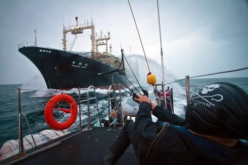 Antiwhaling Activists: The Japanese Will Be Back