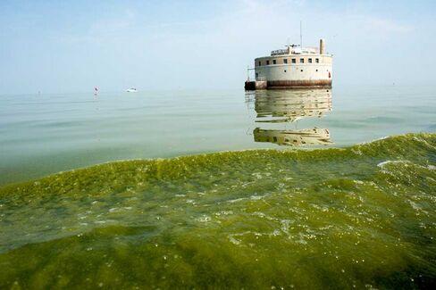 Phosphorus, Algae, and What You Drink