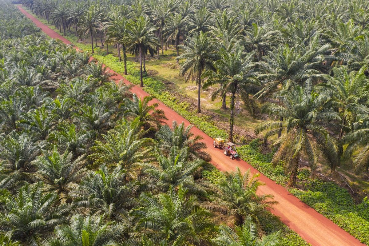 World's Top Edible Oil at Risk as Malaysian State Shuts Estates