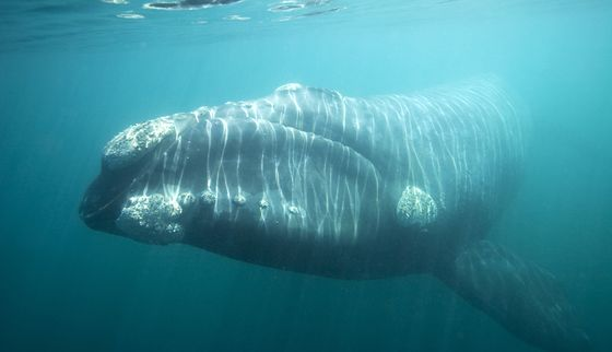 Abandoned by Great White Sharks, Cape Town Is Now Short of Whales, Too