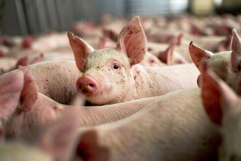 The Chemical That Hurt U.S. Pork Exports
