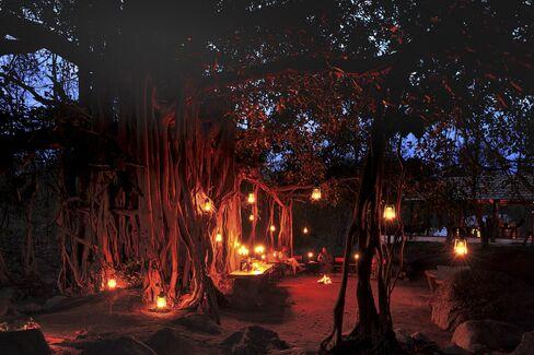 インドにあるジャムタラ・ウィルダネス・キャンプの光景