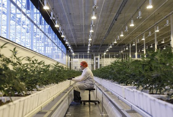 Marijuana-Company Debt Is Surging Along With Their Shares