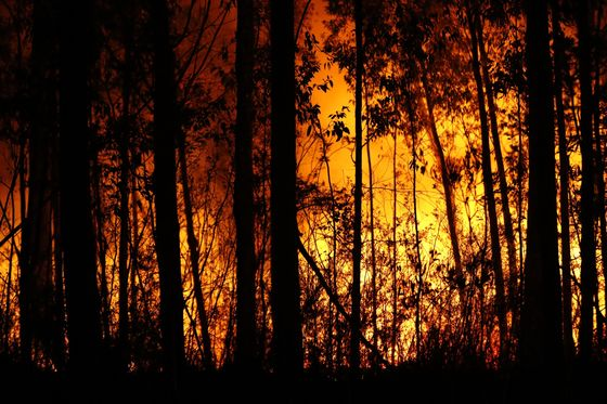 Australia to Scale Up Defense Response to Fires, Morrison Says