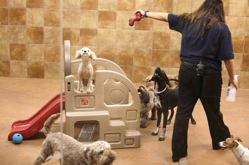 A Hedge Fund Wants to Teach PetSmart Some New Tricks