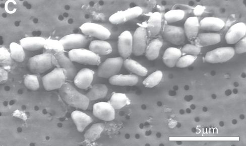 Arsenic-Based Bacteria May Expand Hunt for New Life in Space