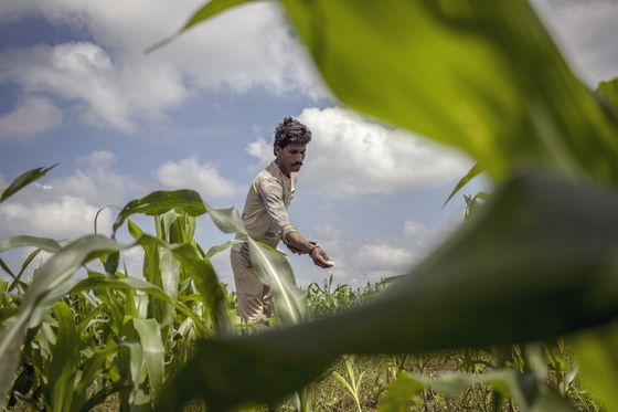 Amazon, Microsoft Swoop In on $24 Billion India Farm-Data Trove