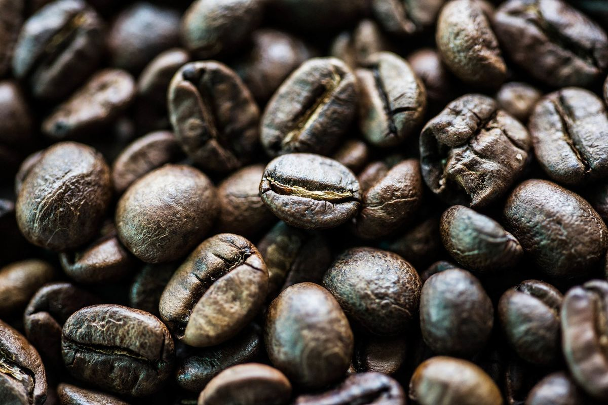World's Priciest Coffee Is Hand-Picked From Elephant Dung