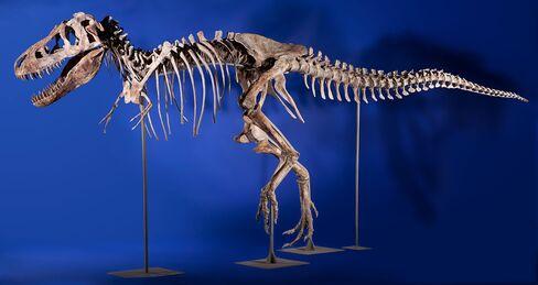 Tyrannosaurus Bataar