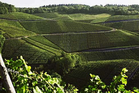 The output of the Ahr region's pinot vineyards is tiny, and few of the wines are exported. The best ones come from the steepest, south-facing slopes that get the most sunshine.
