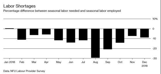 Brexit Worries Make Seasonal Hiring Harder for U.K. Farmers
