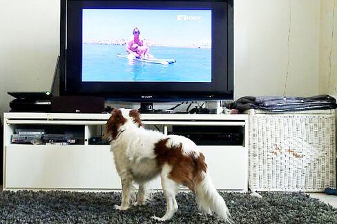 Can Dog TV Make a Profit?
