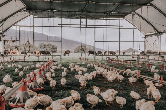 Perdue Is Testing Solar-Powered Chicken Coops on Wheels