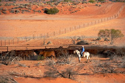 Drovers mustering cattle on horseback at Anna Creek.