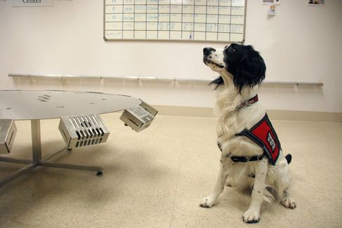 Cancer Detection Dog McBaine