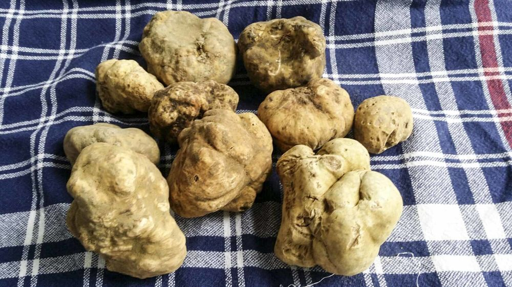 How to Start Your Own Truffle Farm - Bloomberg