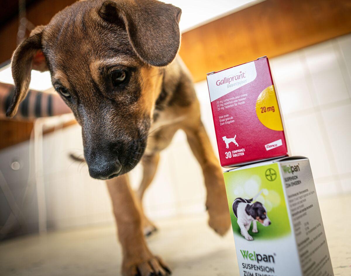 Elanco To Buy Bayer S Animal Health Unit For 7 6 Billion Bloomberg
