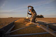 Corn Declines on Lackluster U.S. Export Sales