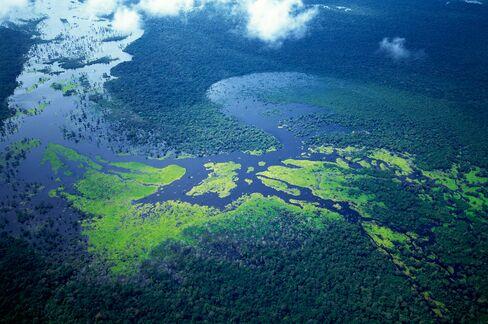 Lush Amazon Rainforest and Tributary