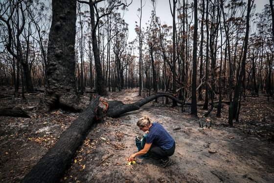 Australia's Fierce Wildfires Are Also Threatening Its Coal Mines