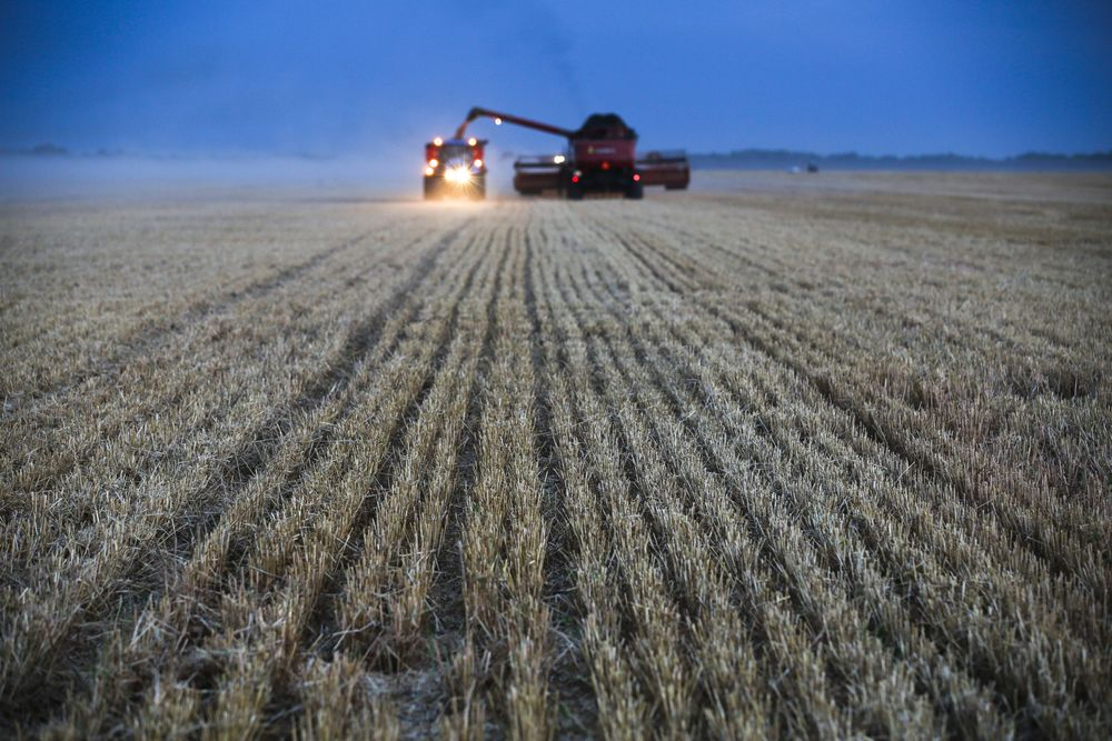 Europe Is Feeling the Power of Russian Wheat as Exports Drop