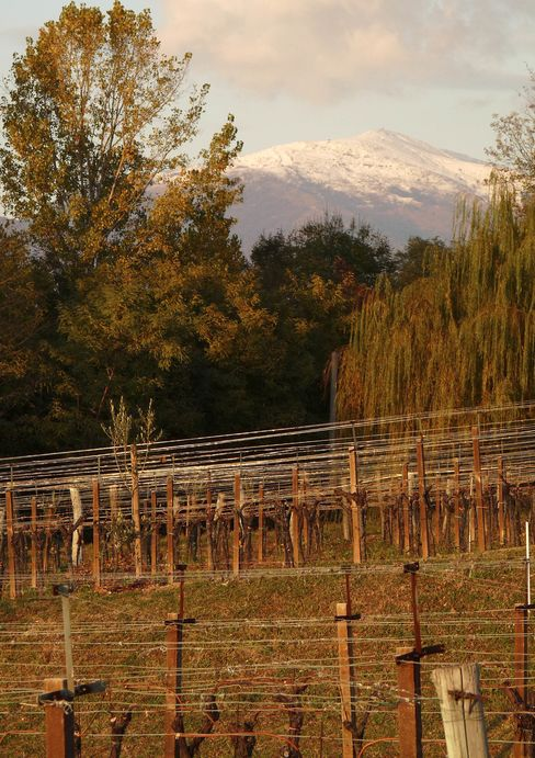 Bastianich Family Vineyards