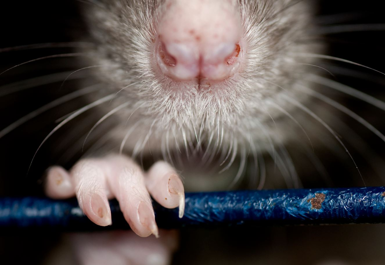 Climate Change Is Scary; 'Rat Explosion' Is Scarier