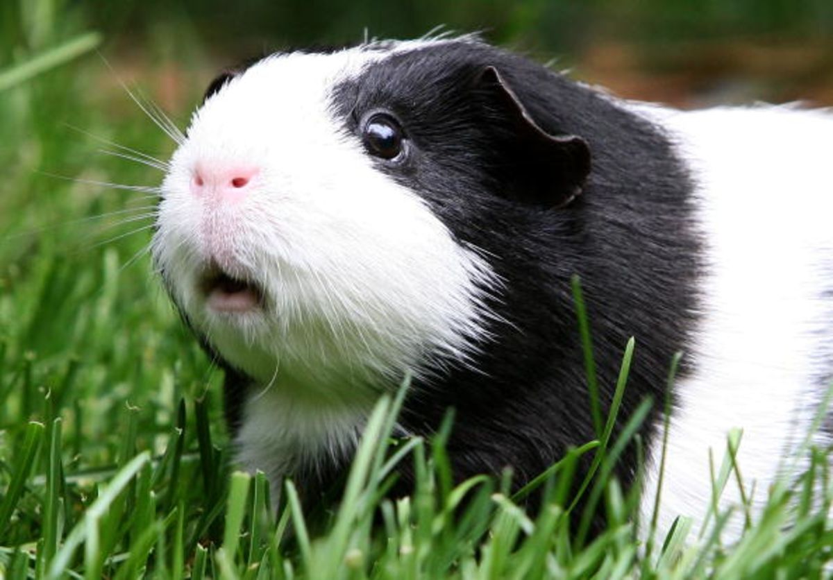 You Don't Want to Be a Human Guinea Pig? That's Unfortunate