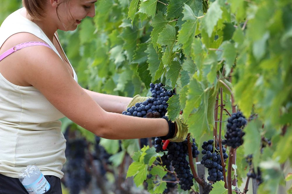 Italy Reclaims Spot as World's Biggest Wine Producer From France