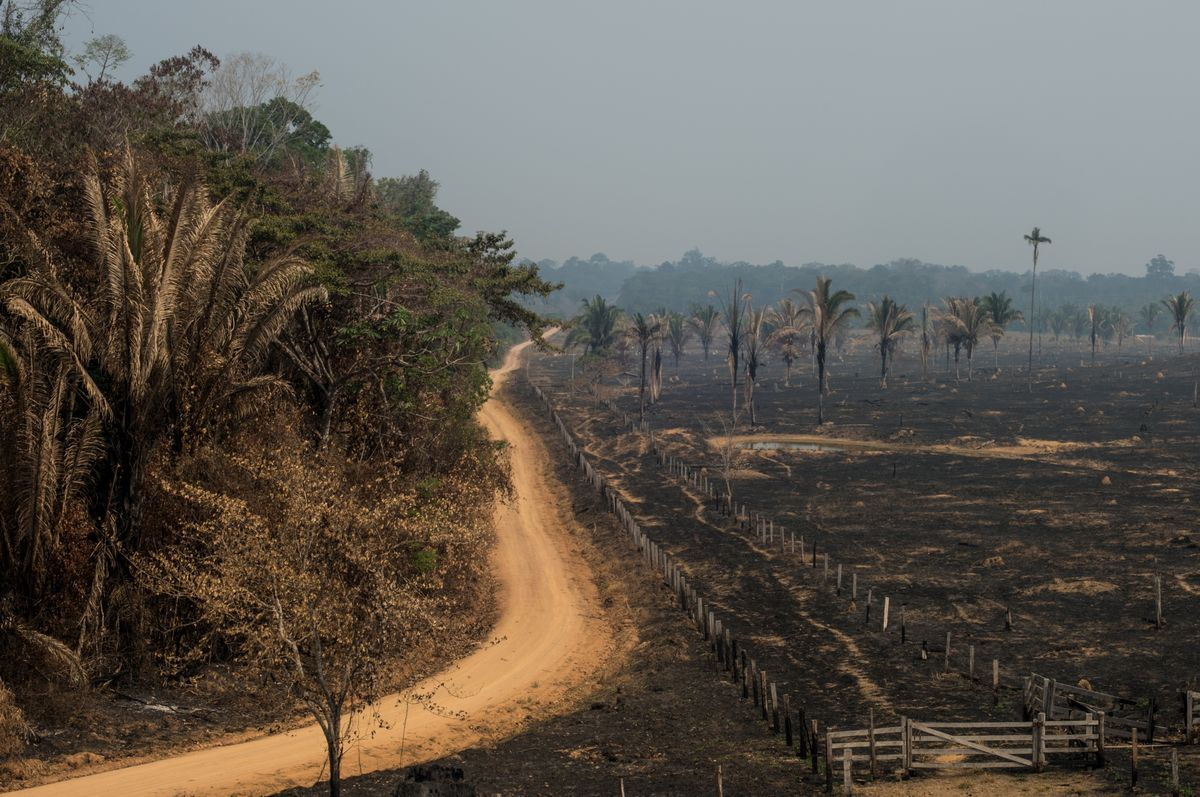 Brazil Sends Army to Fight Amazon Fires; Trump Tweets Support