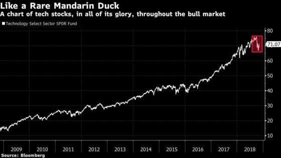 Forget Black Swan, Just Look to the Mandarin Duck: Taking Stock
