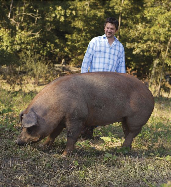 Why It's Difficult to Find Organic Pork