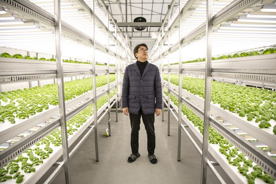 Marijuana and Makeup Are New Growth Areas for Vertical Farms