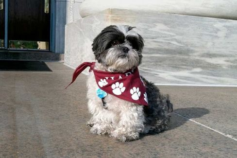 Harvard Medical School therapy dog Cooper