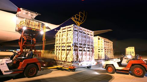 Live cattle in crates are loaded onboard an aircraft.