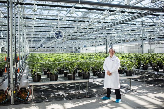 'Mispriced' Pot Stock Hexo Looks to New York to Boost Profile