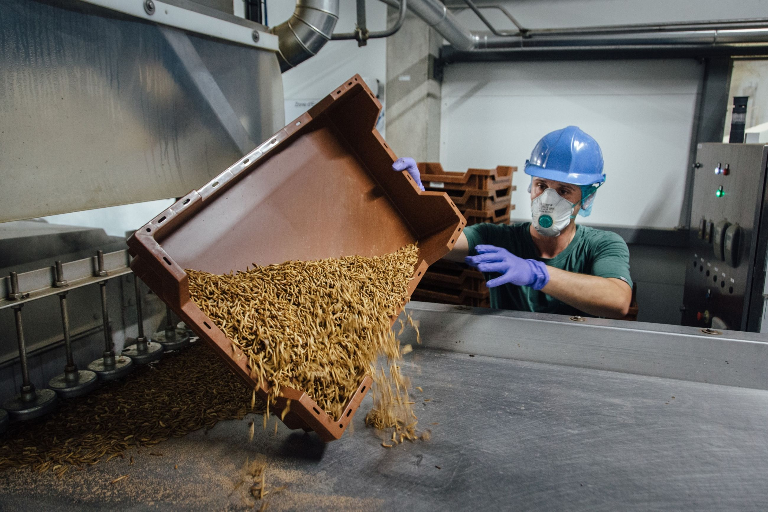 Venture Capitalists Plunge $125 Million Into French Mealworm Breeder Ynsect