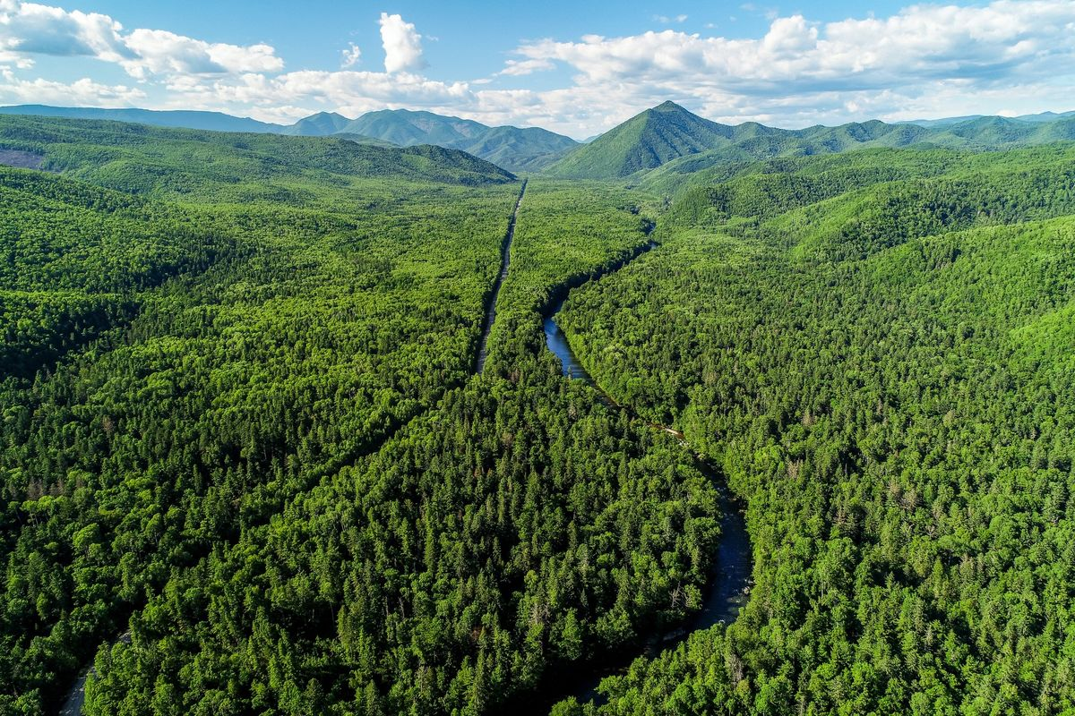 Russia Wants To Use A Forest Larger Than India To Compensate For Carbon