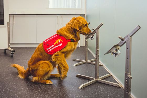 Super-Sniffer Dogs Could Shorten Covid Testing Lines at Airports