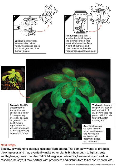 Bioglow Develops Glow-in-the-Dark Plants as Lights