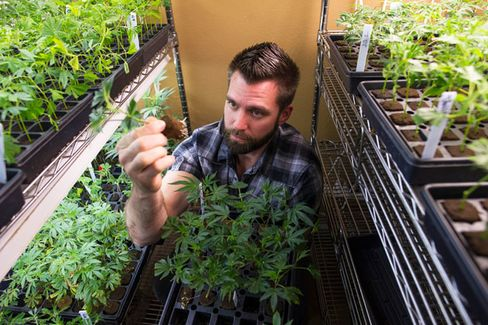 Silicon Valley Is High on Innovation. And Pot