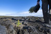 ICELAND-FORESTS-ENVIRONMENT-CLIMATE