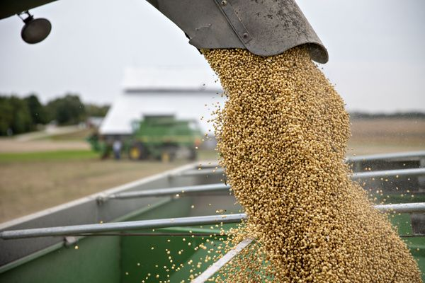 Operations During A Soybean Harvest As Trade War Divides Farming World