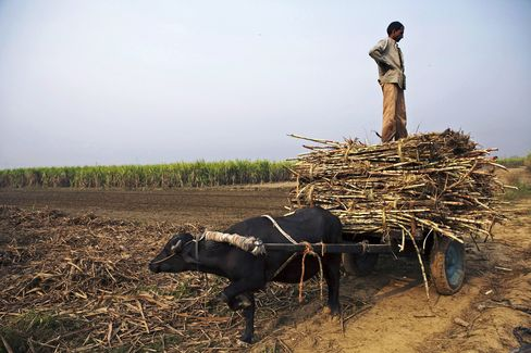 Sugar Mills to Lose $1.1 Billion on Record Cane