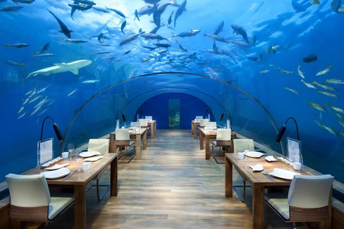 Dining in the company of sharks at Ithaa.